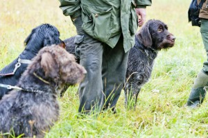 6802581-hunting-dogs-with-hunter